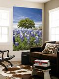 Texas Bluebonnets and Oak Tree  Texas  USA