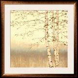 Birch Silhouette II