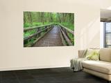 Maple Glade Trail Wooden Bridge  Quinault Rain Forest  Olympic National Park  Washington  USA