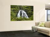 Owharoa Falls  Karangahake Gorge  Waikato  North Island  New Zealand