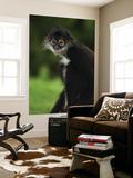Yucatan Spider Monkey (Ateles Geoffroyi Yucatanensis)  Xcaret Eco Theme Park