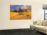 Sand Dunes and Oasis  Desert  Tunisia