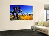 Joshua Trees and Spring Wildflowers Near Mojave