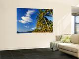 Palm Trees on Palm Cove Beach