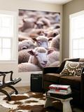 Sheep at Saleyard