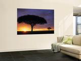 Acacia Tree at Sunrise  Serengeti National Park  Tanzania