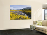 Landscape with Scotch Broom Growing in Abundance