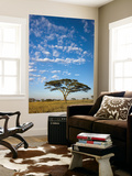 Acacia Trees under Blue Sky with Clouds