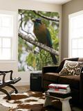 Male Blue Crowned Mot Mot Bird