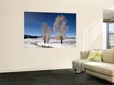 Winter Trees in Lamar Valle