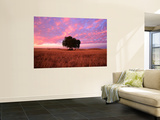 Sunset Over Lone Tree in Paddock  Rochester  Australia