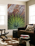 Yucca and Stone