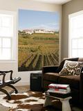 Vineyards in Goriska Brdy Wine Region