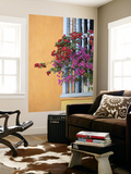 Bougainvillea Adorning Colonial Window