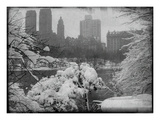 New York City In Winter IX