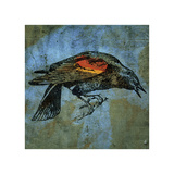 Red Wing Blackbird No 1