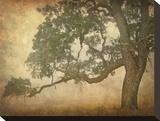 Oak in Fog  Study 1