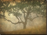 Oak in Fog Study 13