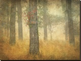 Oak Grove in Fog  Study 26