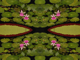 Abstract Lilly Pad