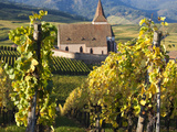 Hunawihr  Alsatian Wine Route  Alsace Region  Haut-Rhin  France
