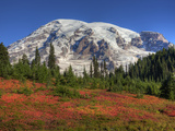 Paradise Valley and Mt Rainier  Mt Rainier National Park  Washington  Usa