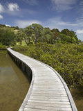 Boardwalk across Mangroves  Sandspit  Warkworth  Auckland Region  North Island  New Zealand