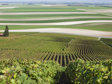 View of Vineyards and Fields  Mont Aime  Champagne Region  Marne  France
