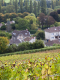Town Overview  Avenay Val-D'Or  Champagne Ardenne  Marne  France