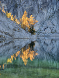 Golden Larch Trees  Enchantment Lakes  Alpine Lakes Wilderness  Washington  Usa