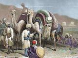 Silk Road  Caravan of Camels Resting  Antioch