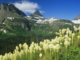 Beargrass Near Logan Pass in Gacier National Park  Montana  Usa