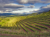 Newton Vineyard  Napa Valley  California  Usa