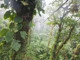 Monteverde Cloud Forest Reserve  Selvatura Adventure Park  Costa Rica