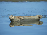 Elkhorn Slough  Moss Landing  California  Usa