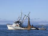 Seine Boats Salmon Fishing  Southeast Near Ketchikan  Alaska  Usa