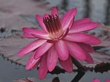 Naples Botanical Garden  Florida  Usa