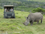 African White Rhinoceros  Inkwenkwezi Private Game Reserve  East London  South Africa