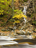 Roaring Brook in Fall in Vermont's Green Mountains National Forest  Sunderland  Vermont  Usa