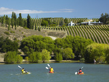 Kayakers and Vineyard  Bannockburn Inlet  Lake Dunstan  Central Otago  South Island  New Zealand