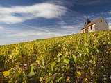 Town Church and Vineyards  Mutigny  Champagne Ardenne  Marne  France