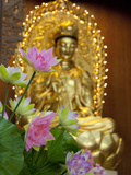 Pink Lotus Flowers in Front of Gold Statue  Kek Lok Si Temple  Island of Penang  Malaysia