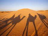 Camel Caravan at Sunset  Grand Erg Oriental Desert  Ksar Ghilane  Tunisia