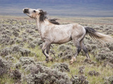 Wild Horse  Wyoming  Usa