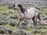 Wild Horses  Wyoming  Usa