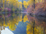 Autumn Color  Whitepine Creek  Wenatchee National Forest  Washington  Usa