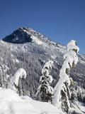 Fir Trees  Snoqualmie Mountain  Mount Baker-Snoqualmie National Forest  Washington  Usa
