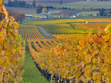 Stoller Vineyard  Dundee  Yamhill County  Willamette Valley  Oregon  Usa