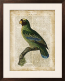Antiquarian Birds VI