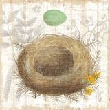 Botanical Nest II